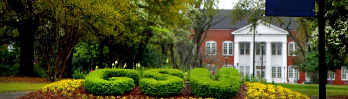 Georgia Southern Bushes