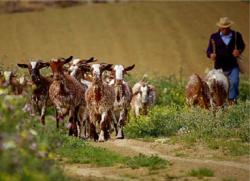 burros in Seville